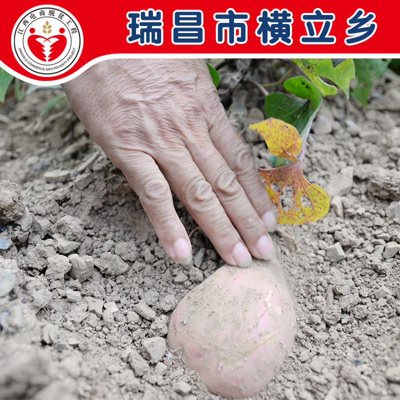 电商公益扶贫 瑞昌 红旗村 红薯5斤(偏远地区不发)