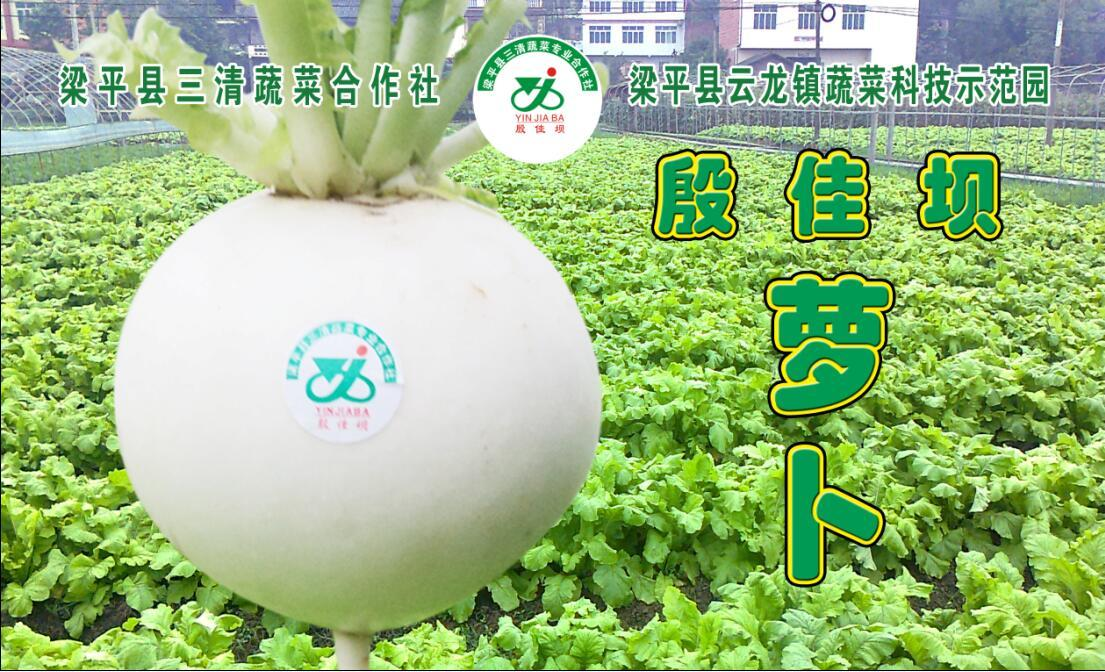 """重庆梁平特产""""殷佳坝""""萝卜贡品6只10斤装礼盒"""