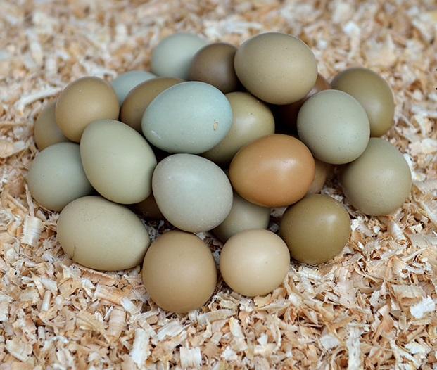 云阳特产  新鲜野鸡蛋  农场直供