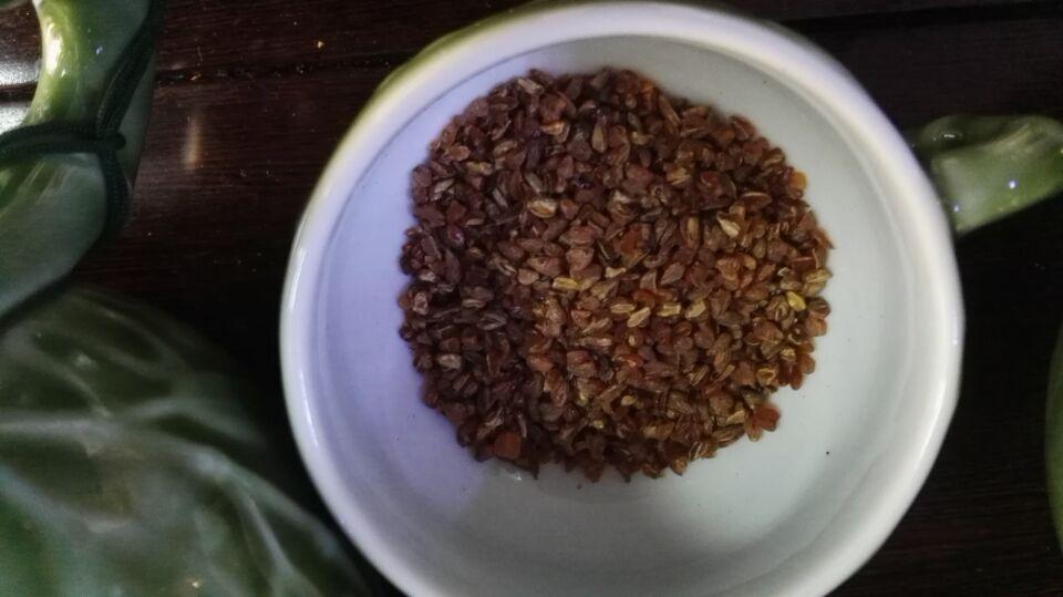 香龍食黑苦荞胚芽茶