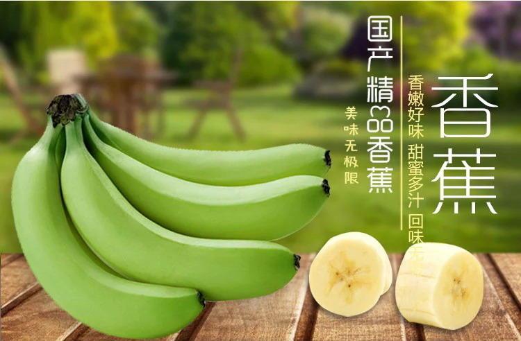 农家自产 云南德宏瑞丽香蕉农家特产新鲜水果香蕉无保鲜剂无催熟剂青香蕉5斤包邮